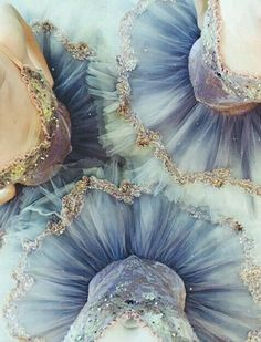 Find images and videos about dance, ballet and tutu on We Heart It - the app to get lost in what you love. Princesa Tutu, Ballet Russe, Raindrops And Roses, Ballet Photography, Landscape Photography, Ballet Beautiful, Dance Photos, Ballet Photos, Ballet Dancers