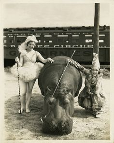 1930s Circus...Wow! I could have been a Hippopotamus trainer! I didn't know you could train them, did you?