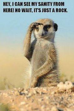 More Kat Salute – Cute - Animals Wild Life Nature Animals, Animals And Pets, Funny Animals, Cute Animals, Desert Animals, Wild Animals, Baby Animals, Exotic Animals, Wildlife Photography