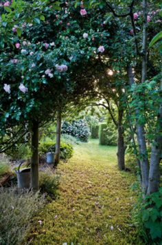 Albertine roses arch over the trees, with a Fatin Latour bush in the distance. Country Style, photography Claire Takacs.