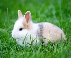 Cómo saber si mi conejo es macho o hembra