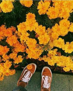 Ideas Yellow Aesthetic Wallpaper Korean For 2019 Hipster Vintage, Style Hipster, Fred Instagram, Disney Instagram, Living In London, Images Esthétiques, Orange Aesthetic, Korean Aesthetic, Aesthetic Roses