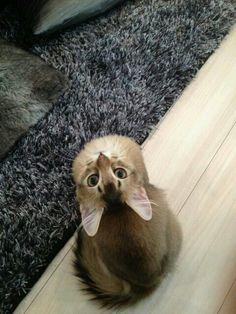 Hello! :D