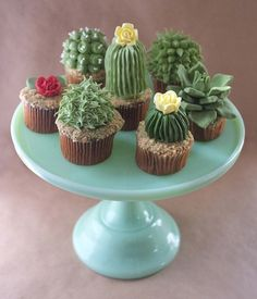 Cactus and Succulent cakes   AnOther Loves