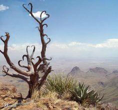Heart branches in desert