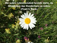 Das Geheimnis des Glücks: Die Fähigkeit, den Moment wahrzunehmen....:-) http://www.heikeholz.de/leben-im-hier-jetzt-und-heute/