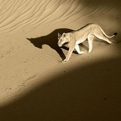 Wildlife Animals & Nature — . The long shadow. Photography by @ (Thomas...