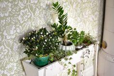Lilla P och Långa B: Bibliotek och blommor Plants, Plant, Planets