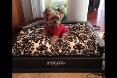 Wooden Dog Bed for Medium/Large Dogs by Zwoodshop on Etsy, $149.00