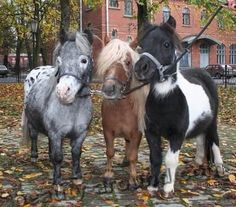 Beautiful Horse Breeds with 25 Photos Cute Baby Horses, Baby Farm Animals, Funny Horses, Cute Little Animals, Cute Funny Animals, Animals And Pets, Cute Dogs, Mini Horses, Most Beautiful Horses