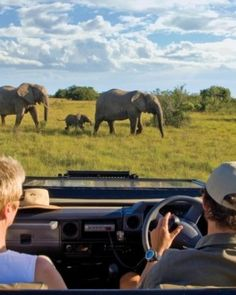 All-inclusive rates mean twice-daily safari game drives on a Big Five game reserve. #Jetsetter #JSElephant