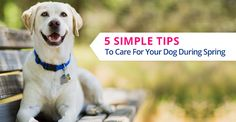 How Do You #Plan to Take Care of your #Doggy During #Spring? 5 Simple #Tips To Care For Your #Dog During Spring -