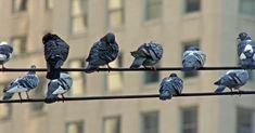 Hundreds Of Birds Are Being Blinded By An Unknown Disease Bird Sketch, Types Of Eyes, Wildlife Conservation, Backyard Birds, Birds Of Prey, Birds Eye View, Bird Watching, Love Birds, Flocking