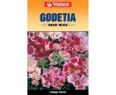 Yates Godetia