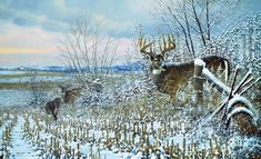 """""""After the Storm - Whitetail Deer"""" Whitetail Deer Pictures, Whitetail Deer Hunting, Wildlife Paintings, Wildlife Art, Deer Art, Moose Art, Deer Targets, Deer Wallpaper, Deer Drawing"""