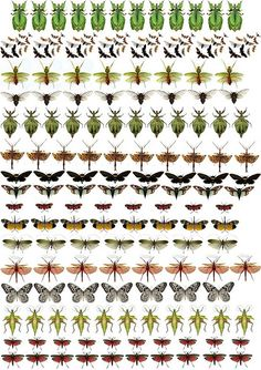printable insects for collage or altered art