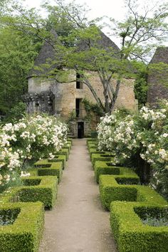 WOW, those boxwood hedges Chateau de Losse, Dordogne, Aquitaine, France