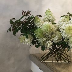Hydrangea Paniculata. Fave.