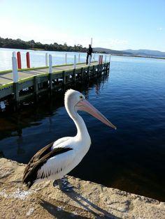 Mallacoota lake, Victoria, Auatralia Oh The Places You'll Go, Places To Visit, Australia Animals, Victoria Australia, Wildlife, Birds, Paint, Inspired, Friends