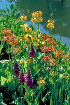 Something you can do in a weekend (though it needs ongoing maintenance!): create a wildlife pond