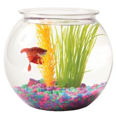 1000 images about raffle on pinterest raffle tickets for Fish bowl petsmart