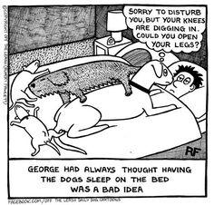 Boxer dog humor