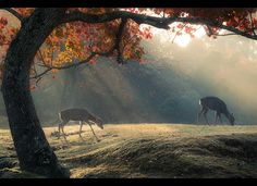 Autumn Morning in Nara by ScottSimPhotography
