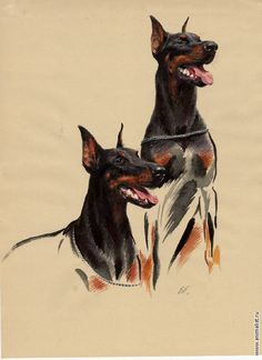 Two Dobermans. I like the way they did this, realistic but it fades away. Black Doberman, Doberman Love, Dragon Anatomy, Animal Line Drawings, Animals And Pets, Cute Animals, Bauch Tattoos, Dog Items, Dog Paintings