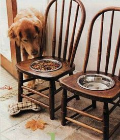 Elevated dog feeder - an easy DIY - no instructions really needed.  Trace a circle on the chair, drill a 1/2 hole large enough for a saber saw blade, cut out circle with saber saw, and sand.  Tada... And it can match the rest of your kitchen chairs.