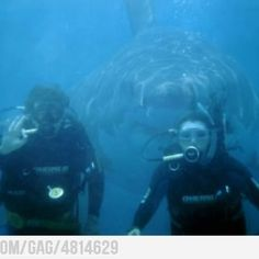 Best photo bomb ever! but not really funny...I'm sure it's not real - right? This made my heart drop to my stomach for some reason. Great Whites are really that big!!! AHHHHHHHHHH!!!!!