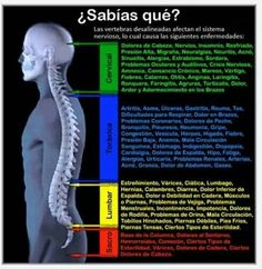 quiropractica. Columna vertebral