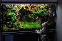 Gecko Vivarium, Snake Terrarium, Large Terrarium, Reptile House, Reptile Room, Cute Reptiles, Reptiles And Amphibians, Aquascaping, Moss Plant