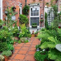 Your winner for our People's Choice is Richard Small with his courtyard garden i. - Your winner for our People's Choice is Richard Small with his courtyard garden in Tyne and Wear. Small Front Gardens, Small Courtyard Gardens, Small Courtyards, Small Backyard Gardens, Backyard Landscaping, Outdoor Gardens, Landscaping Ideas, Backyard Ideas, Plants For Small Gardens