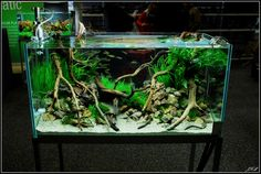 i would LOVE to have this tank! possibly a planted tank for some future goldies?