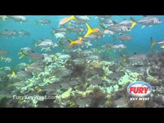 Key West Snorkeling | Parasailing | Jet Ski | Sunset Cruises | Fury Water Adventures