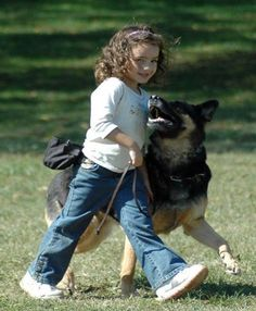 Dog Obedience Training: Schutzhund at it's best… I grew up with several German Shepherds. We nev… – Sam ma Dog Training Dogs And Kids, Dogs And Puppies, Schutzhund Training, German Shepherd Puppies, German Shepherds, Dog Games, Schaefer, Training Your Dog, Training Tips