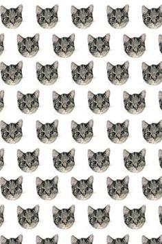 Plain #cat iphone background