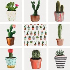Watercolor Succulents cactus clip art collection | 8 FREE PNG IMAGES