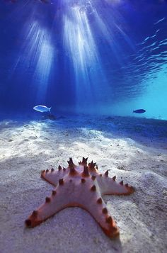 Living starfish. Fascinating, we're so used to seeing their skeletons.