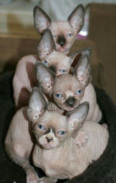 Did someone clone me? I look just those cats. No kidding. I have that exact same expression plastered on my face.
