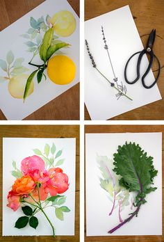 Blog — Mon Voir; drawing from the garden