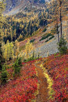 Along the Pacific Crest Trail by bob simari, via Flickr