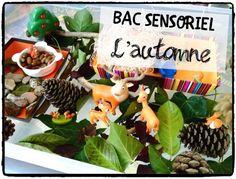 Bac sensoriel d'automne #1 Petite Section, Sensory Activities, Cycle 1, Halloween, Homeschooling, Centre, Stage, Science, Autumn
