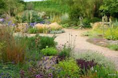 Beth Chatto: notice the island bed with yuccas, verbascum, nassella - a great mound that the path diverges around.
