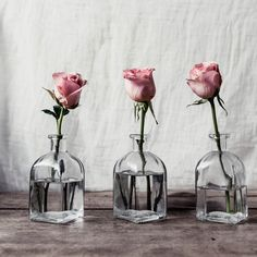 TT – Everything's Coming Up Roses by Kim Klassen
