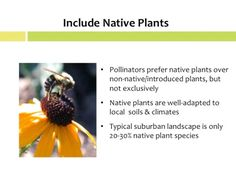 Enhancing pollinator habitat through research, education and design Trees And Shrubs, Flowering Trees, Flowers Perennials, Planting Flowers, Hummingbird Plants, Green School, Spring Bulbs, Plant Species, Garden Care