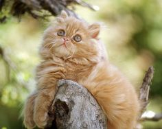 Very interesting post: TOP 72 Funny and Cute Cats and Dogs. Also dompiсt.сom lot of interesting things on Funny Cat, Funny Dog.