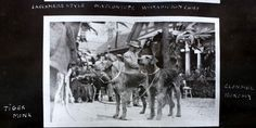 Larchmere Style - Airedale Terriers (Tiger Monk and Chief) Owned by Mr. Eobert Jordan c. 1911