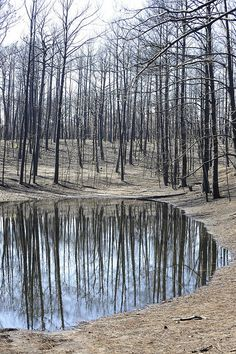 By Texas Parks and Wildlife Department. Bastrop State Park. #drought