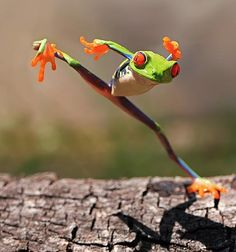 """""""And I was like 'don't make me go all Ninja Frog on your ass!' and now I'm stuck. Ow."""""""